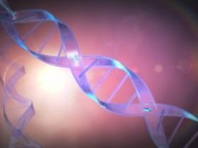 DNA亲子鉴定的原理