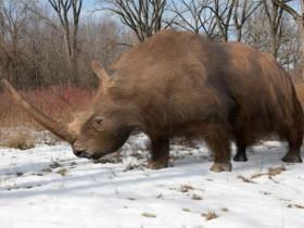 研究表明:导致羊毛犀牛(西伯利亚独角兽)灭绝的是气候变化,而不是过度捕猎