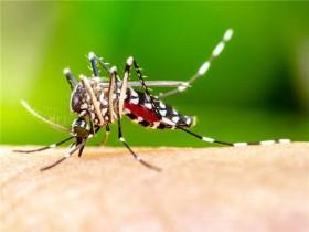 为什么有些人招蚊子