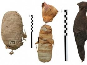 用X射线成像技术揭示古埃及动物木乃伊的内部