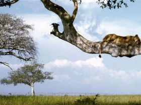 狮子会爬树吗