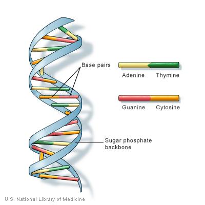 DNA是什么?